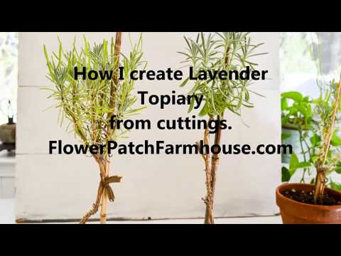 How to Create Lavender Topiary