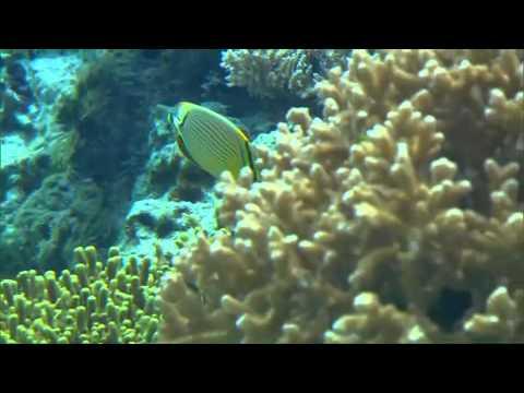 Explore Japan - Okinawa Churaumi Aquarium