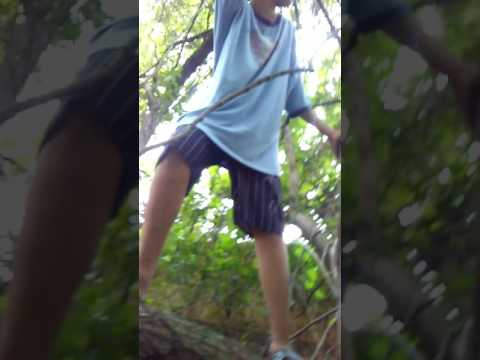 Crazy kid climbing a tree with super nectar