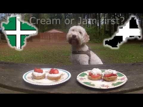 Dog decides Devon vs Cornwall cream tea debate
