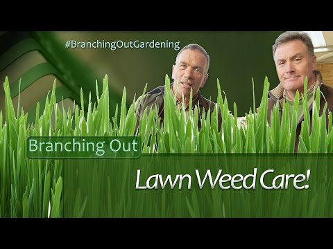 How to Keep Your Lawn Weed Free - Branching Out Gardening