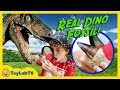 Real Dinosaur Fossil A Life Size Raptor Surprise Egg Toys