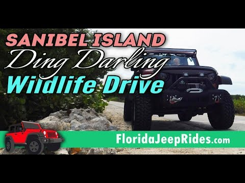 Sanibel Island's Ding Darling Wild life drive is paved now...