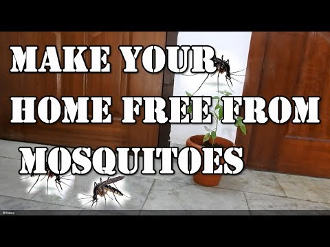 How to make your home free from mosquitoes naturally