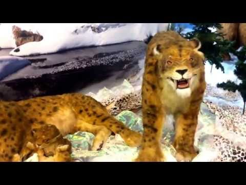 Ice age giants animation exhibition at Aberdeen centre