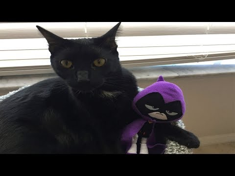 Teen Titans Go! Starfire tries to rescue Raven from a CAT!
