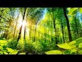 Nature's Golden Light!  ...   (music  by Tim Janis)