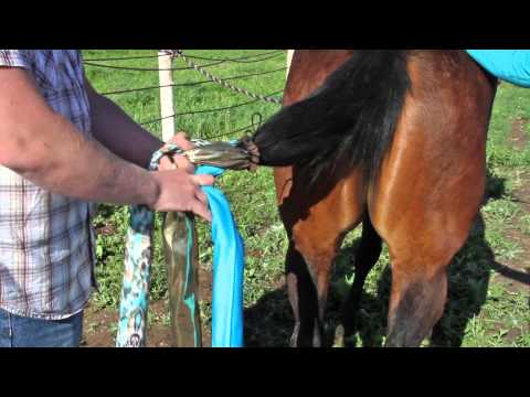 How to Put in a Braided Horse Tail Bag