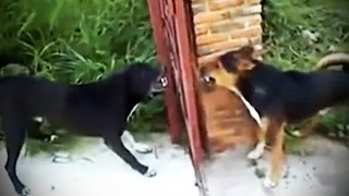Dumb Pets ★ SILLY but FUNNY Animals [Funny Pets]
