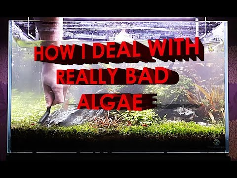 KILL PLANTED TANK ALGAE WITHOUT CHEMICALS!!