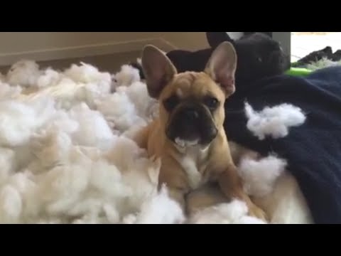 Guilty Dogs Who Are Sorry Not Sorry