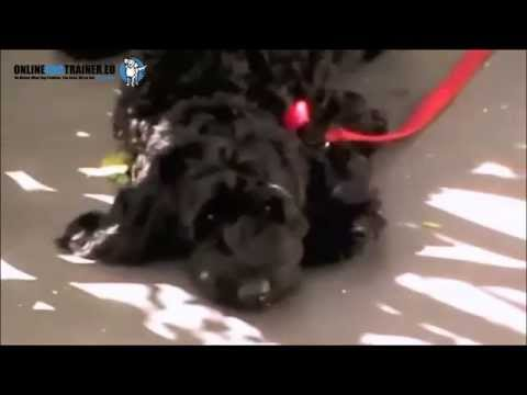 Dog Training Video 2 - Stop Your Dog Chewing On The Lead.