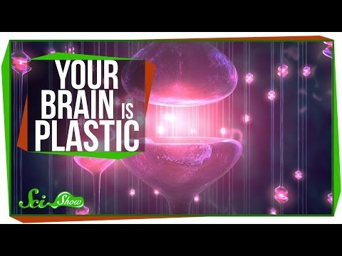 Your Brain is Plastic