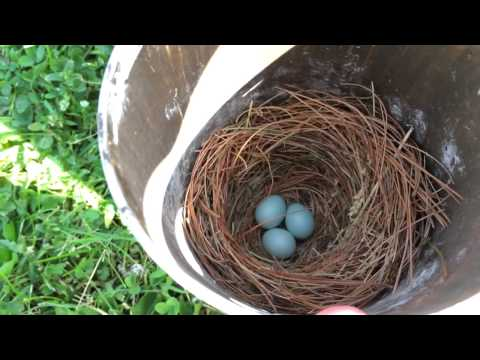 Gilbertson PVC Bluebird Box with Eggs