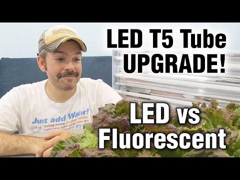 T5 Fluorescent vs Thrive Agritech (Transcend) LED Grow Lights -Hydroponic Lettuce Test