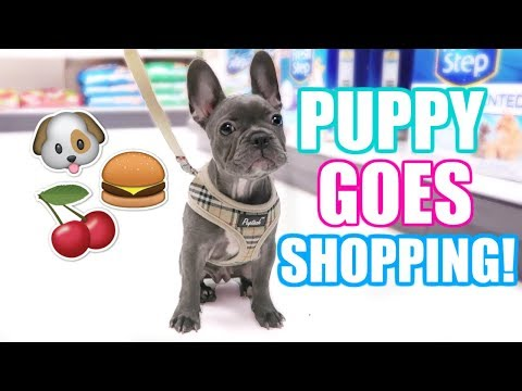 PUPPY'S 1ST TIME SHOPPING! BUYING TREATS, TOYS & FOOD!