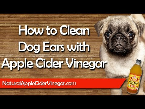 How to Naturally Clean Dog Ears with Apple Cider Vinegar