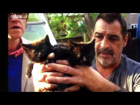 segment on feral cat issues UK as aired on The One show