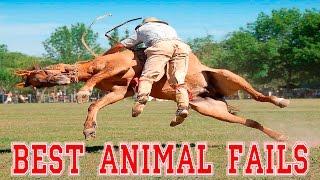 BEST ANIMAL FAILS - Ultimate Animal Fails Compilation 2016 - Animal Fail Videos