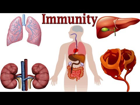 What Is Immunity and the Immune System