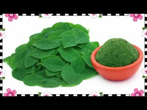 👴 How To Consume Moringa Powder ✂ Moringa Oleifera Tree Health Benefits