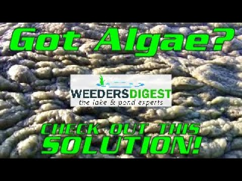 Removing Lake Algae and Pond Algae