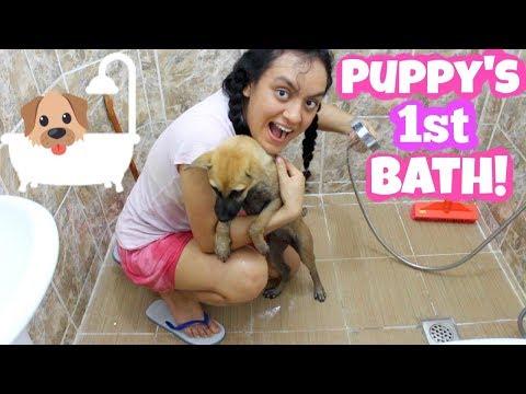 How i Bathe my Puppy + 9 Dog Bathing Tips!