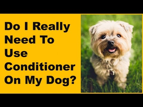 Do I Really Need To Use Conditioner On My Dog? | Healthy Clean Pet