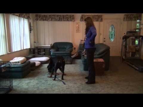Severe Food Aggression & Resource Guarding - Before/After Dog Training