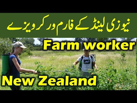Work in New Zealand : New Zealand Farm Worker Visa.