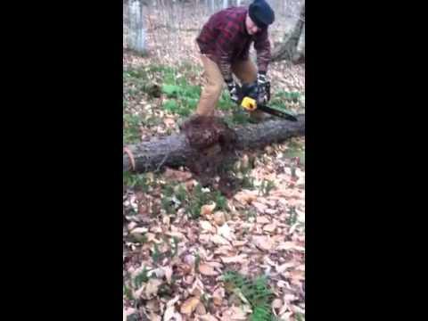 Vermont Maple Burl-Cutting part 1