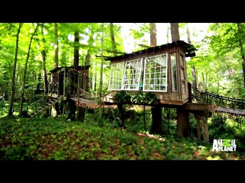 A Treehouse Built for the Mind, Body and Sprit
