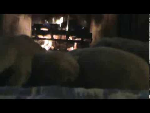 BOO BOO puppies keeping warm by the fire.