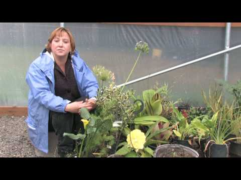 Growing Flower Gardens : How to Find Free Trees, Shrubs & Plants