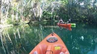 Weeki Wachee River Kayaking With Manatees Florida Adventure Tours
