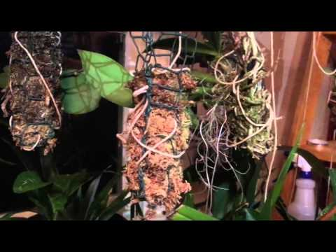 Test of self watering system using cotton twine (part 2)