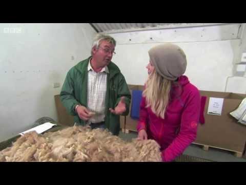 Melford green Alpacas - Countryfile 17.11.13
