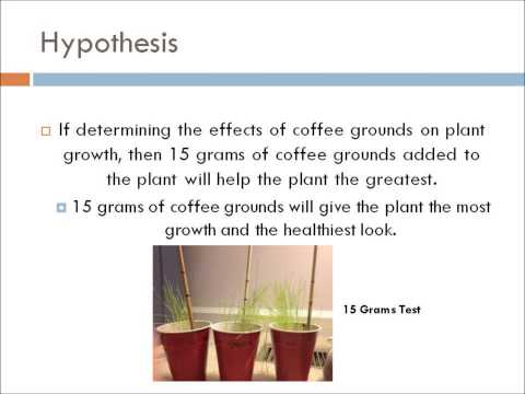 The Effects of Coffee Grounds on Plant Growth