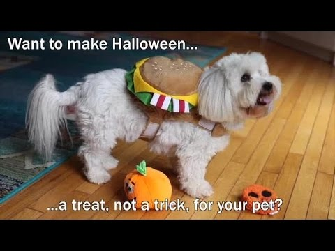 10 Great Halloween Safety Tips for Pets