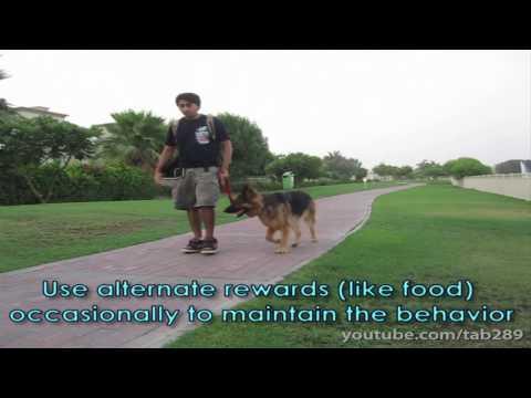 Clicker Dog Training: STOP Leash Pulling!