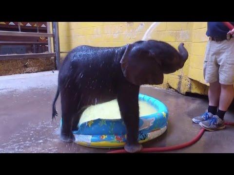 Watch This Excited Baby Elephant Splash Around During Her First Bath