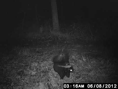 Critter Cam