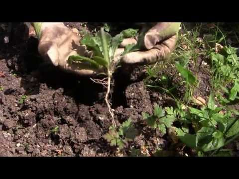 Easy Weeding - How to Get Rid of Weeds in Your Vegetable Garden