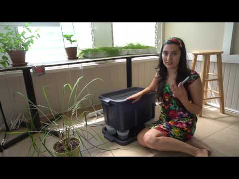 How To Start A Vermicompost Bin
