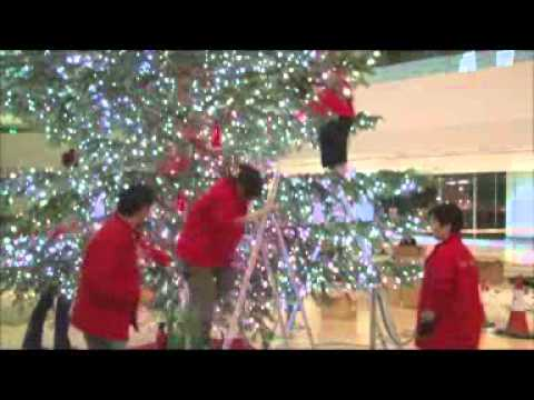 Pacific Place Making of the 100 REAL Christmas Trees Moving In