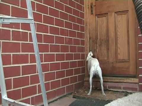 Obsessive Dog chewing door