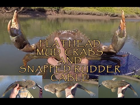 FLATHEAD, MUD CRABS AND SNAPPED RUDDER CABLE