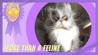 More Than a Feline