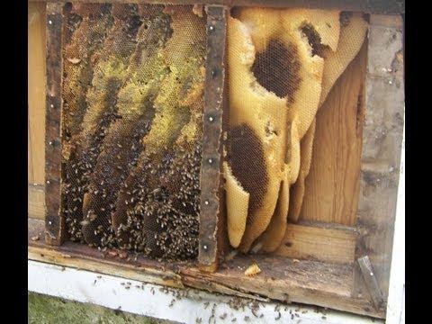 Honeybee/ Cutout