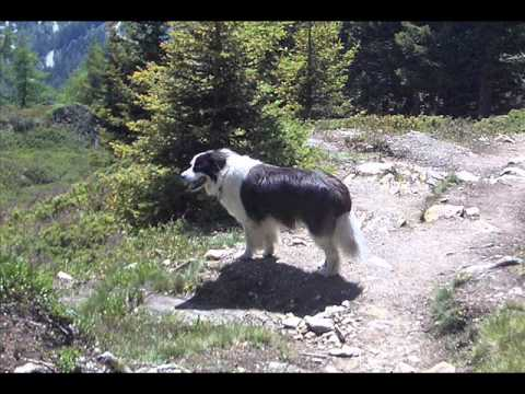 Chip's life as a dog excerpt.wmv